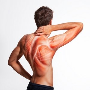 ALA ubrzava oporavak mišića