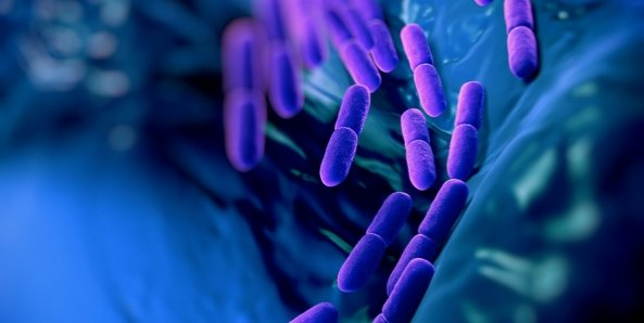 Kako odabrati probiotik