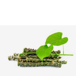 Dobrobiti biljke guduchi za funkciju imuniteta